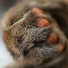 Cats Paw by Simon Duckworth