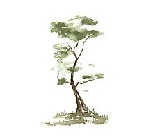 Little Zen Tree 204 Photographic Print