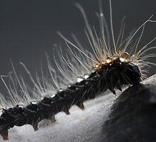 A Small Caterpillar by VladimirFloyd