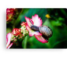 Snail on a Hydrangea Canvas Print