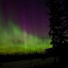 The Get out of Bed Honey the Auroras are Out by peaceofthenorth