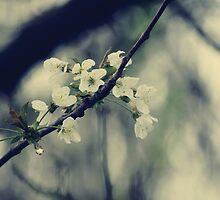 Focus on Spring by Anne Staub