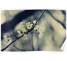 Focus on Spring Poster