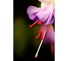 Dream of purple softness Photographic Print