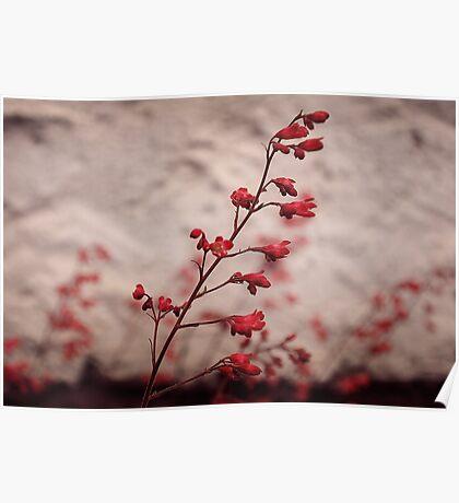 Red zen spirit Poster