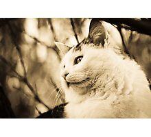 Cat stares into the wild Photographic Print