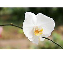 Flower power (1) Photographic Print