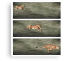 Cheetah frames Canvas Print