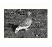 Pigeon at Roath Park Lake Cardiff (BW) Art Print