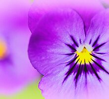 Violas by inkedsandra