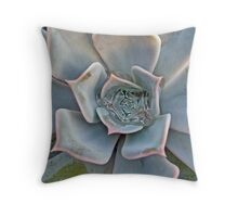 Succulent in Blue and Pink Throw Pillow