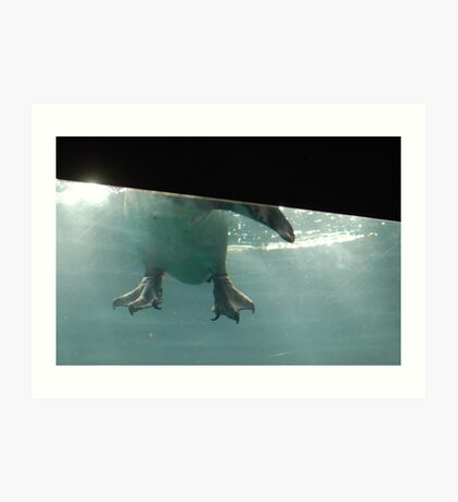 Penguin Feet Art Print