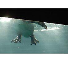 Penguin Feet Photographic Print