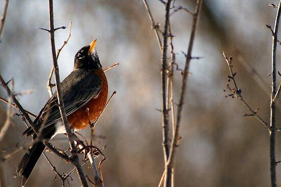 Good Morning Robin by Robin Clifton