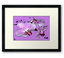Purple orchids on purple background Framed Print