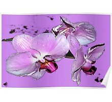 Purple orchids on purple background Poster