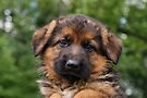 Loveable Puppy by Sandy Keeton