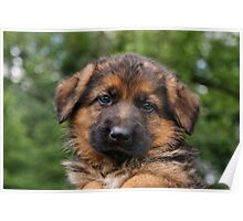 Loveable Puppy Poster