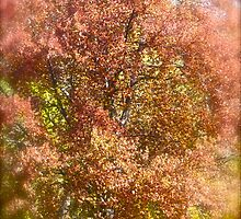 Spring Wonders . by Brown Sugar.Johann Strauss II - The Blue Danube Waltz. by Brown Sugar . Woooows !!! Favorites: 1 Views: 202 . Danke ! dziękuję bardzo ! by © Andrzej Goszcz,M.D. Ph.D