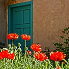 Fire Orange Poppies &amp; Turquiose Blue Door by Laughing Bones