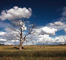 Pastoral by David Haworth