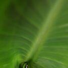 Leaf Unfurling by Glenn Cecero