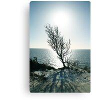 Tree Sea Sun Snow Canvas Print