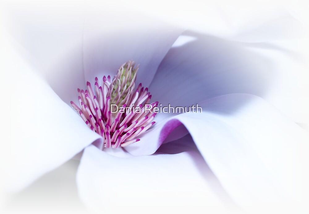 Magnolia III by Dania Reichmuth