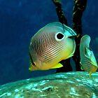 Four-eye Butterflyfish by Robbie Labanowski
