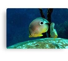 Four-eye Butterflyfish Canvas Print