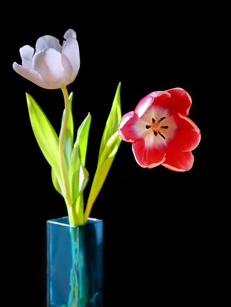 Tulips in a blue vase by RedMann