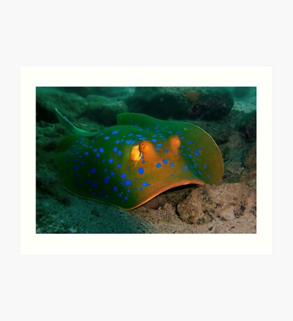 Blue-spotted Ribbontail Ray Art Print