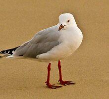 The Gull by BoB Davis