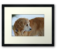 Who Goes There?! FEATURED PHOTO Framed Print