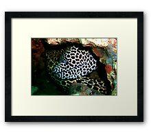 Honeycomb Moray Framed Print