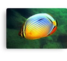 Reddfin Butterfly Fish Canvas Print