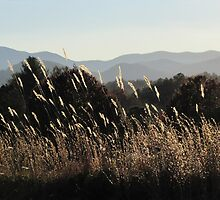 Gentle Breezes In November Grasses by Jean Gregory  Evans