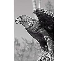 Falcon Photographic Print