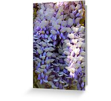 Blooming Wisteria Flowers By Jonathan Green Greeting Card