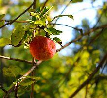 The Apple Tree by MichaelGRM
