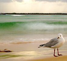 Beach Dweller by BoB Davis