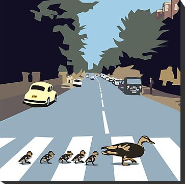 Abbey Road ducks by Matt Mawson