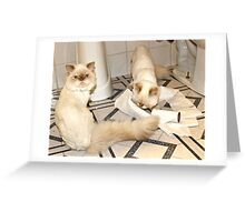 He did it! Greeting Card