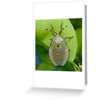 Bronze Orange Stink Bug Nymph - Musgraveia sulciventris Greeting Card