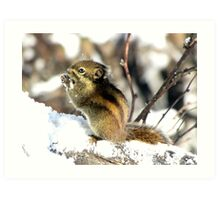 Squirrel, Emei Shan, Sichuan, China Art Print