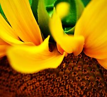 """""""Sunflower Suprise"""" - by Trout MaGee(Jobe Ewing) by TroutMaGee"""