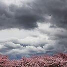 Spring Bird by Dragomir Vukovic