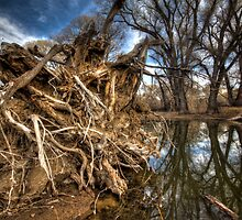 Rooted...but not the one by Brad Grove by Bob Larson