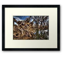 Rooted...but not the one by Brad Grove Framed Print