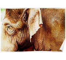 Honolulu Zoo: Elephant Poster